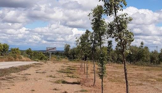 Els arbres plantats al costat de les piscines han agafat tots.